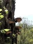 Tree-fungi.jpg