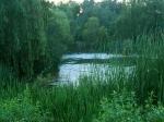 swampy-pond.jpg