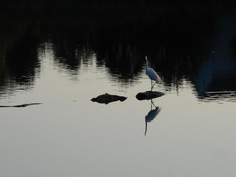 Blue-Heron2.jpg