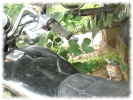 motorcyclechick 2