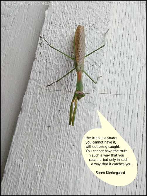 https://echopen.files.wordpress.com/2018/10/cixous-mantid-snare-of-truth.jpg?w=502&h=668